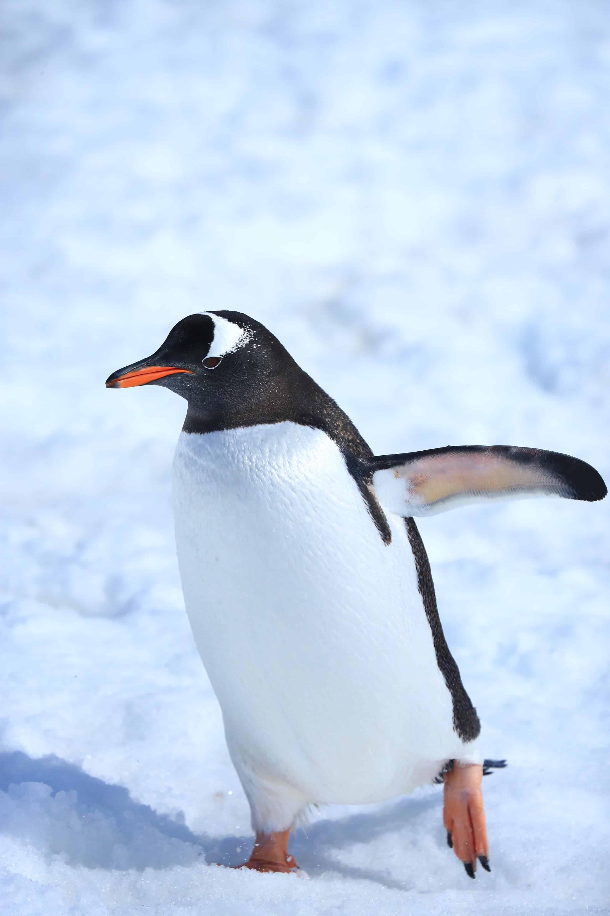 Penguins at Port Lockroy