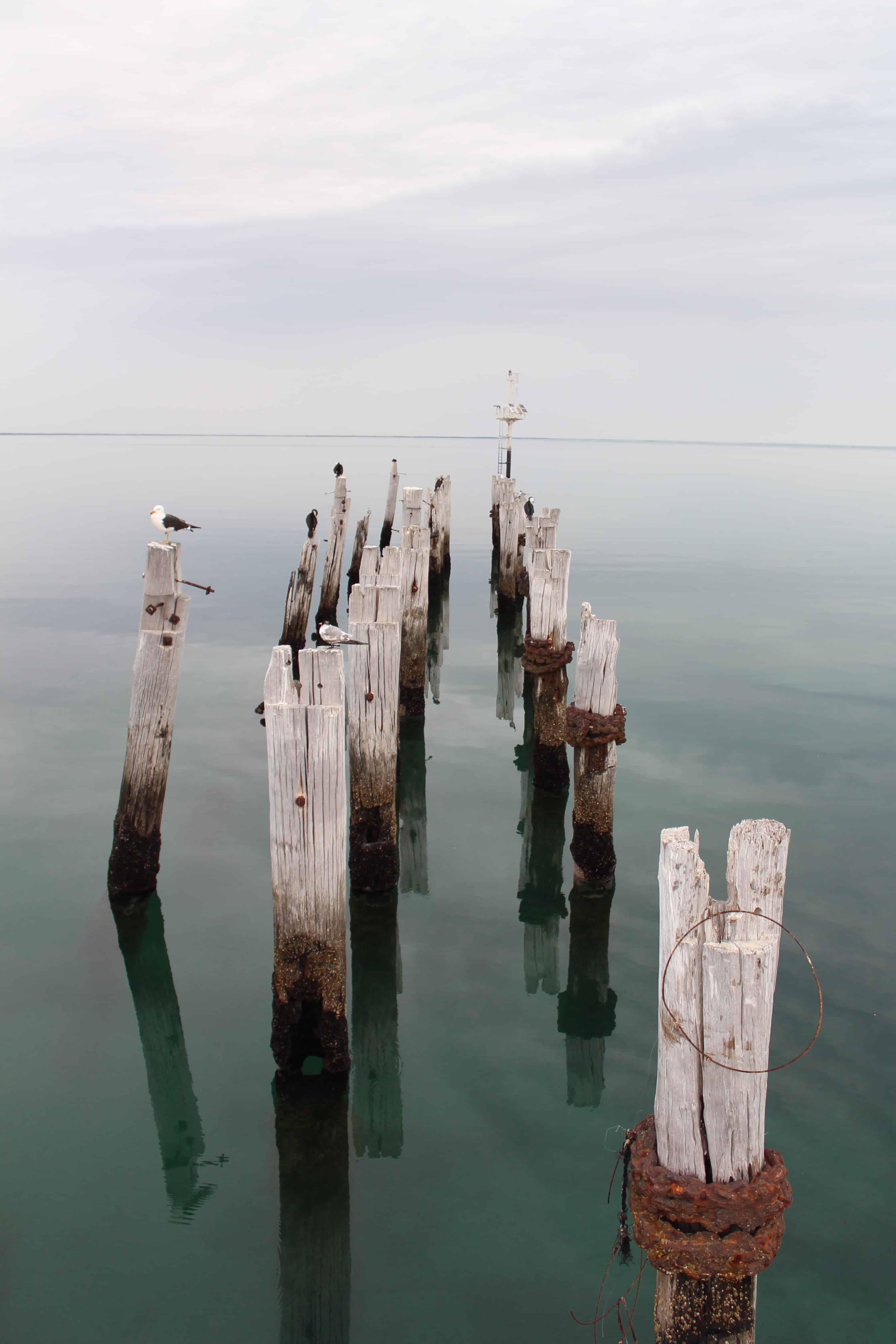 Seabirds enjoying the sanctuary of old jetty pylons.