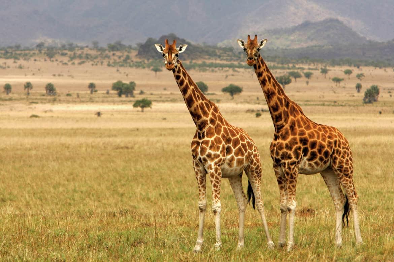 Go wild in Uganda